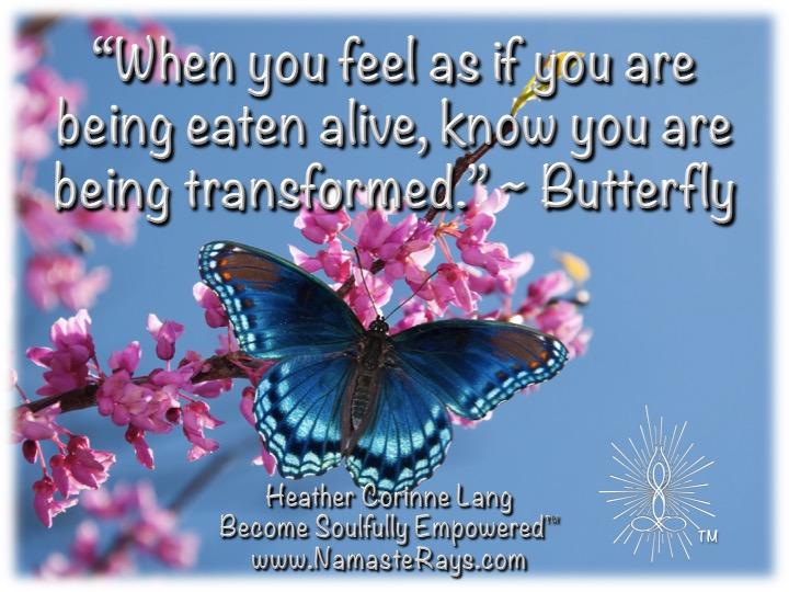 Butterfly Wisdom